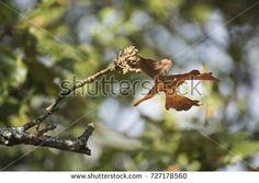 Single leaf on tree