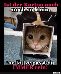 Here at EBENBLATT you& find the coolest and funniest cats shirts for . Funny Dog Memes, Cat Memes, Funny Dogs, Funny Animal Pictures, Funny Animals, Cute Animals, Kittens Cutest, Cats And Kittens, Tierischer Humor
