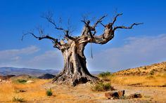 tree_dead_rope_desert_vegetation_48118_2560x1600.jpg (2560×1600)