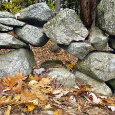 Things I've Seen - December 3, 2014 by New Hampshire Garden Solutions