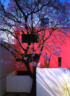 Am binging on Barragan today, Casa Gilardi in spring….   Love it...the pink /white and purple of the jacaranda tree....and the green leaves come later.......