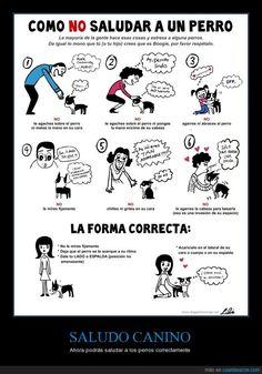 Cómo debes y cómo NO debes saludar a un perro - Ahora podrás saludar a los perros correctamente