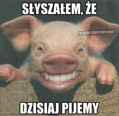 Pig Happy for mood lifting, using Eden's Garden EOs Your Smile, Make Me Smile, Office Humor, David Cameron, Pet Store, Haha, Told You So, Jokes, Pets