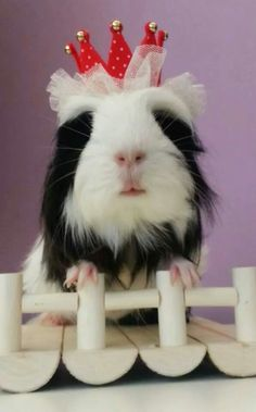 princess piggy :)