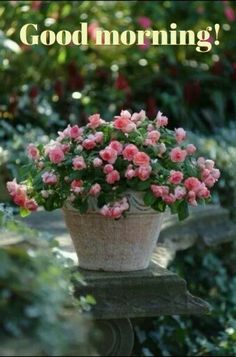 Beautiful Garden Good Morning Wallpaper Hd