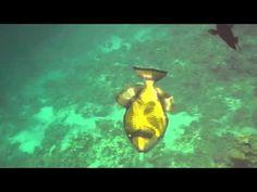 рыба, красное море, музыка и видео Олега Сапегина