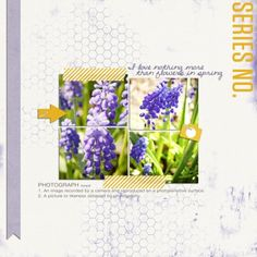 Using purple with complementary yellow and white canvas. Layout by Tara McKernin.