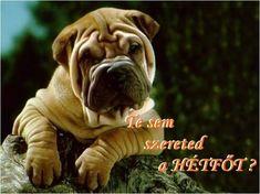 A3, Dogs, Animals, Animales, Animaux, Pet Dogs, Doggies, Animal, Animais