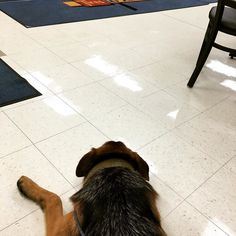 Zelda agrees that flat tires are the worst..but the guys at #lesschwab are super nice for letting her hang out in the lobby! #flattire #flattiressuck #waiting #gsd #gsdlove #gsdofinstagram #germanshepherd #germanshepherdsofinstagram #dogsofinstagram