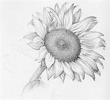 Image result for flower drawings images