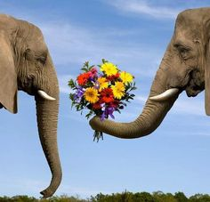 Wallmonkeys Elephant Giving Bouquet Peel and Stick Wall Decals WM222199 (36 in W x 35 in H) >>> Click image for more details. (This is an affiliate link) #HomeDecorIdeas