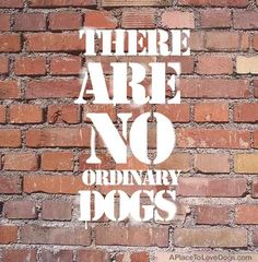 There Are No Ordinary Dogs