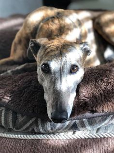 Fundraisers on Facebook are a great way to convert your birthday or other special day into a day that will help the hounds! Start one today!