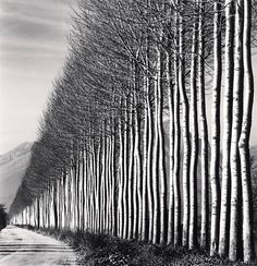For Sale on - Poplar Trees, Fucino, Abruzzo, Italy, Silver Gelatin Print by Michael Kenna. Offered by photo-eye Gallery. Line Photography, Abstract Photography, Digital Photography, Landscape Photography, Nature Photography, Portrait Photography, Travel Photography, Photography Courses, Mobile Photography