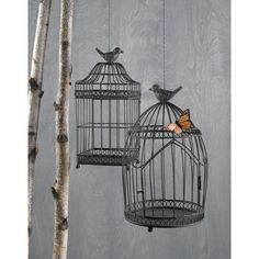 I like that the birds are on top of their cage