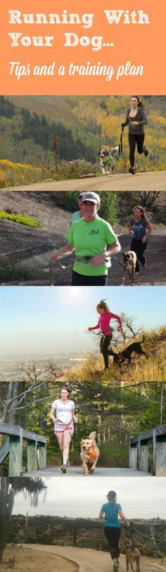 Dawn Celapino, Owner, Leash Your Fitness, shares her tips for running with your dog. She also provides a training plan for you.