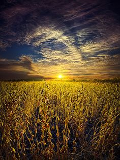 Field of Visions  Horizons by Phil Koch