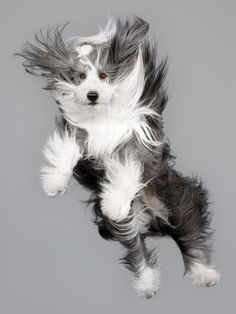 Forget swimming dogs - falling dogs is even cuter (though I can't help worrying that they all landed OK)