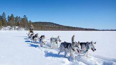 Avec ses 40 huskies et ses quelques chevaux, Tinja vit en Laponie finlandaise du Nord, à près de 290 km de la ville la plus proche.