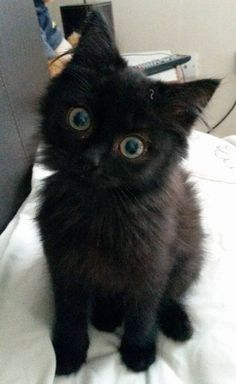 Ziggy! This is what she looked like on her first day home from the shelter. by gshurik cats kitten catsonweb cute adorable funny sleepy animals nature kitty cutie ca