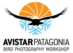 AvistarPatagonia is a unique nature photography initiative at which world-renowned bird photographers and tour leaders will gather in the pristine landscapes of Chilean Patagonia. Our comprehensive program is open both to novice photo enthusiasts and professional photographers alike; the event includes field workshops at Torres del Paine National Park, as well as technical seminars and a cycle of lectures given by keynote speakers. AvistarPatagonia will be held at the exclusive Remota Lodge.