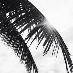 NATURAL BEAUTY  #repost @figtny #ecoeyewear #oneframeonetree #ecofriendly #eco #sustainable #treesforthefuture #savetheplanet #climate #climatechange #recycle #earth #environment #earthconscious #blackandwhite #palmtree #photography #nature
