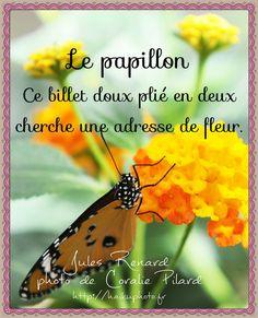 Français - Haïku-photo Plus Belle Citation, France, Photos, Messages, Words, Image, Comme, Butterflies, Illustrations
