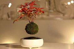 Floating trees are now a reality. From the Japanese designers of Hoshinchu, comes the Air Bonsai, it consists of a bottom 'energy base' and floating