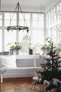 DESDE MY VENTANA: OH CHRISTMAS TREE, Silvertip