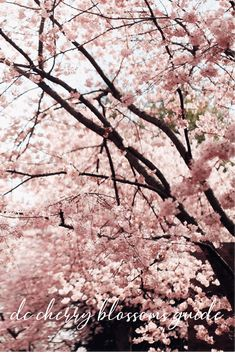 Comprehensive guide to the Washington, DC cherry blossoms: Explore the DC cherry blossom festival with these seven helpful tips and cherry blossom locations—from peak bloom time to best photo spots to even cherry blossom snacks! Us Travel, Travel Style, Travel Tips, Travel Destinations, Washington Dc Travel Guide, Iconic Photos, Travel Couple, Cherry Blossoms, Where To Go