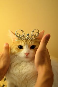 I'm a queen     #catsfunny #funnycats #lolcats