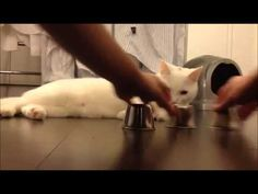 *MUST SEE* Smartest Cat Ever - Cat Plays Shell/Cup Game #viralvideo
