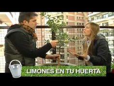 ▶ Limón sutil (capítulo 9) - YouTube COCINEROS ARGENTINOS