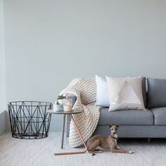 Flooring Xtra designed a soft and durable carpet that is great for your animals to take long naps. Italian Greyhound, Carpet Design, Large Dogs, Throw Pillows, Flooring, Bed, Animals, Home, Big Dogs