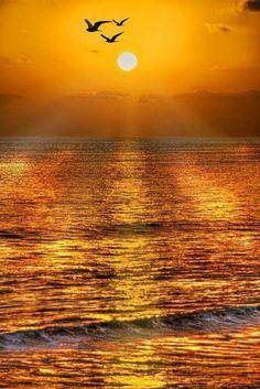 Altın gün batımı - Golden Sunset