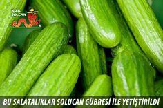 Cucumber, Vegetables, Model, Food, Scale Model, Essen, Vegetable Recipes, Meals, Eten