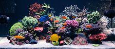 130-gallon SPS reef tank