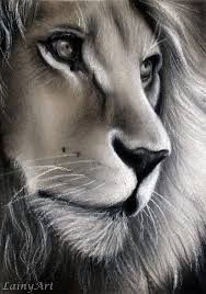 Image result for Best pencil drawing of a Lion