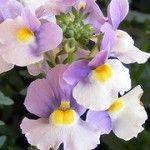 Violet is Feb birth flower