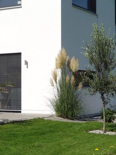 The pampas grass blooms . The Effective Pictures We Offer You About Garden Types yards A quality