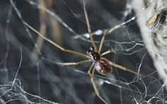 Welcome to Gabriel Atanbiyi Blog: Science unravels spiders' monstrous food web