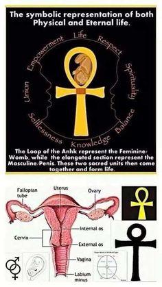 Anhk Ancient Egyptian Religion, Egyptian Cross, Egyptian Symbols, Egyptian Mythology, Ancient History, Ankh Symbol, Life Symbol, Ankh Meaning, Fertility Symbols