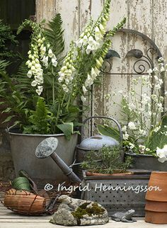garden vignette, foxglove in container & lots of lovely metals