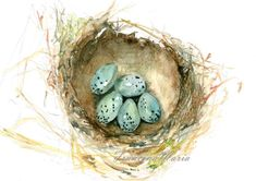 Watercolor painting bird nest print, nest with 5 blue eggs, nature still life, art painting print. on Etsy, $19.50