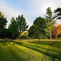 it was beautiful evening, though sun shined for a little while  through the grayish clouds - but I think we are back on the warmer side ;) #Beautiful #Greenery #Nature #Evening #LongShadows #HappyThursday #Lovely #GoldenLight #Chicago #Uptown