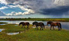 Paarden in het Buytenpark Zoetermeer Foto: Petra Simons