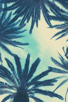 Watching palm trees swirl a sickening pattern past the glass--making a fist (naomi shihab nye)