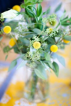green foliage and billy buttons