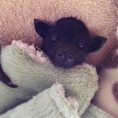 bat, all tucked in✨✨