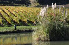 Chateau Lamartine Castillon Cotes de Bordeaux . Photo Erwan Giraud 10/2018 Bordeaux, Vineyard, Photos, Outdoor, Pictures, Vineyard Vines, Bordeaux Wine, The Great Outdoors, Outdoors